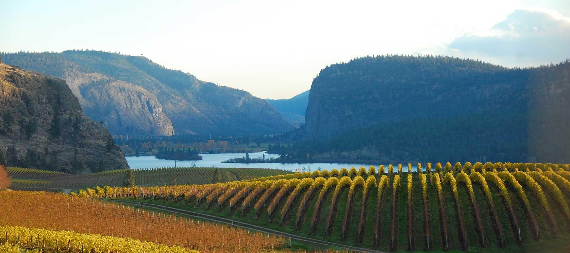 Blue Mountain Winery Okanagan Winery Okanagan Wine